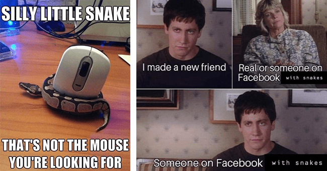 """19 snake memes 