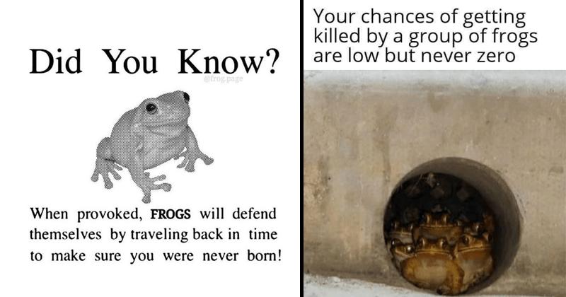 Funny random memes, dank memes lol, frog memes, funny