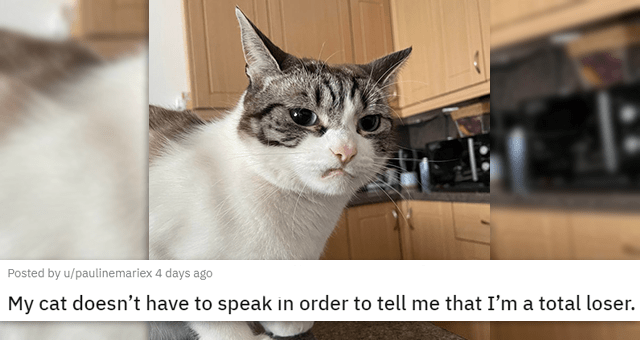 a collection of posts about cats | thumbnail includes a picture of a judgmental cat 'My cat doesn't have to speak in order to tell me that I'm a total loser. u/paulinemariex'