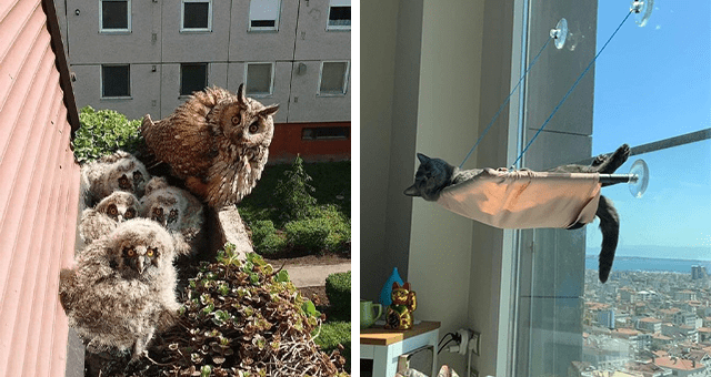 this week's collection of pictures that are worth more than 1000 words | thumbnail includes two pictures including a family of owls sitting on a windowsill and a cat chilling in a hammock attached to a window