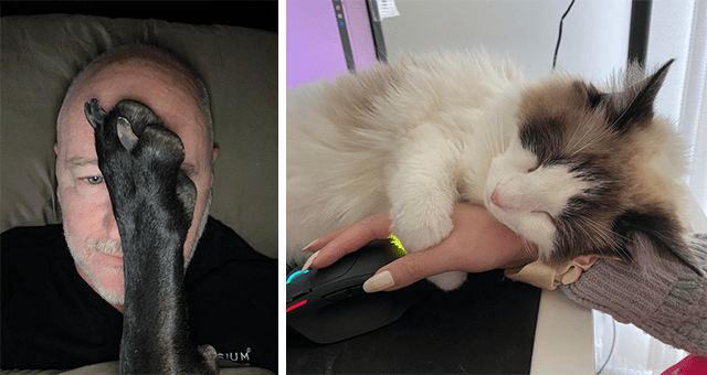 pictures capturing the reality of living with animals | thumbnail includes two pictures including a man with a dog's paw on its face and a cat hugging a person's hand