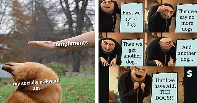 17 dog memes | thumbnail left dog avoiding compliments (socially awkward ass), thumbnail right gru from despicable me dog meme