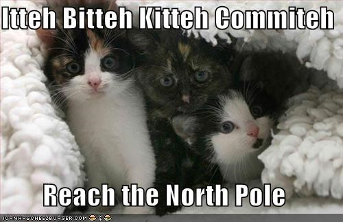blanket,cute,ibkc,kitten,lolcats,lolkittehs,north pole,santa,snow