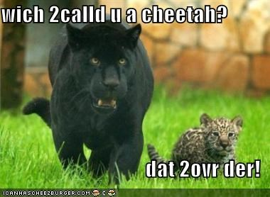 Cheezburger Image 1447635712