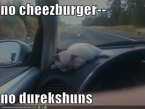 Cheezburger Image 1448118016