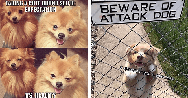 """27 dog memes 