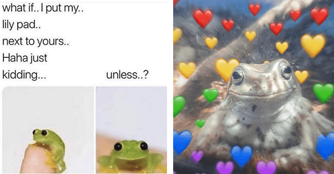 """28 frog meme images 