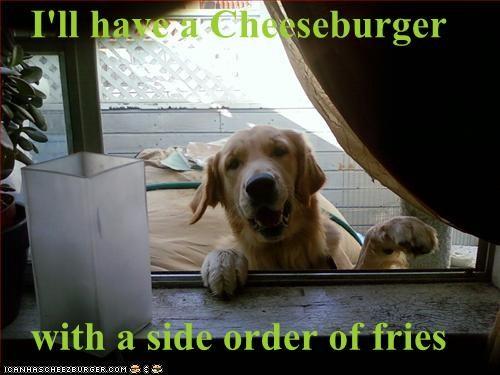 Cheezburger Image 1448481024