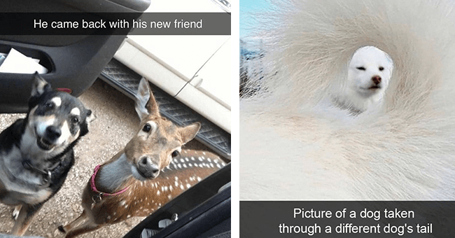 17 dog snapchats | thumbnail left dog and deer standing together outside of car, thumbnail right picture of dog taken through another dog's tale