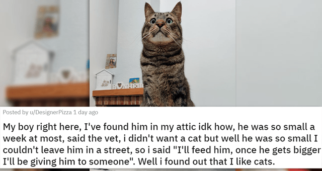 """posts of animals newly adopted this week 