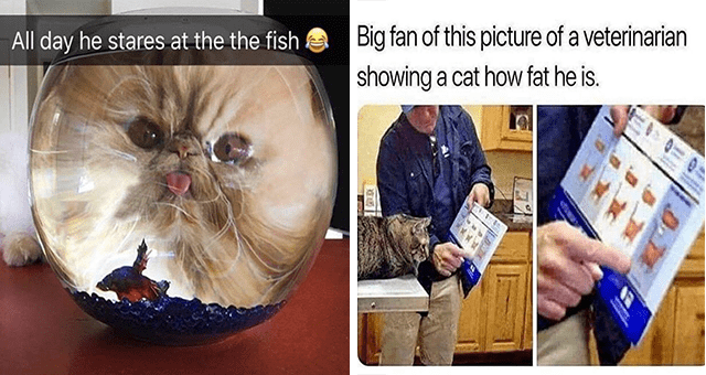 Caturday cat memes | thumbnail includes two memes including a cat behind a fish bowl 'Glasses - All day he stares at the the fish a' and a cat at a vet's appointment 'Product - Big fan of this picture of a veterinarian showing a cat how fat he is. D.T'