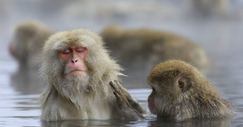 list cute monkey winter animals
