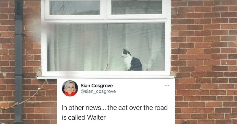 Funny post about a neighbor's cat communicating across the street through the window.