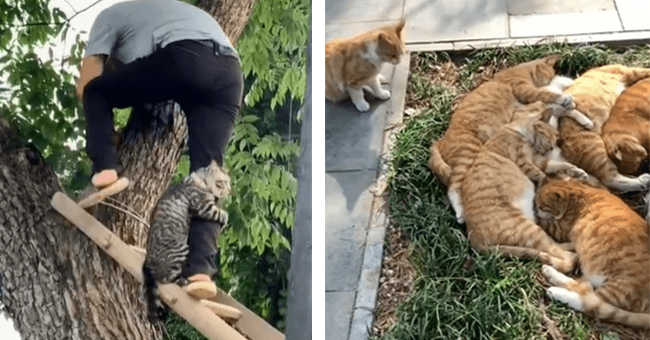 5 cat videos from instagram | thumbnail left cat clinging to leg of rescuer climbing down ladder, thumbnail right pile of ginger cats
