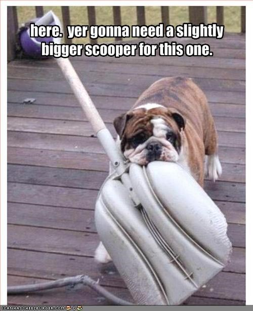bulldog,helping,pooper scooper