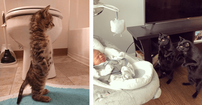 12 images of cats standing up | thumbnail left small orange cat standing up in bathroom, thumbnail right two black cats standing up peering at baby in bassinette