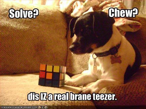 confused game jack russel terrier nom nom nom - 1451936512