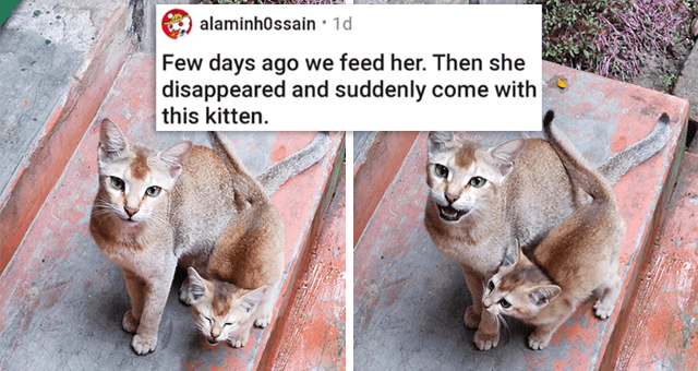 a collection of posts about cats | thumbnail includes two pictures of a cat mom and her kitten 'Few days ago we feed her. Then she disappeared and suddenly come with this kitten. u/alaminh0ssain'