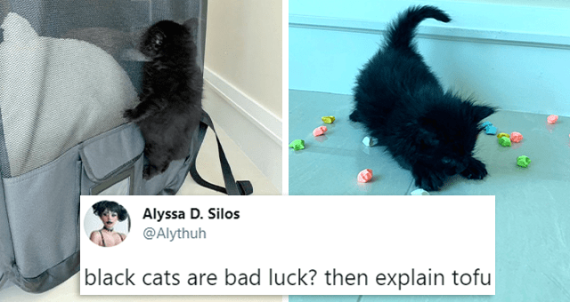 tweets about black cats not being bad luck | thumbnail includes two pictures including a black kitten climbing a bag and a black kitten stretching and one tweet 'Product - Alyssa D. Silos @Alythuh black cats are bad luck? then explain tofu 11:37 PM · Jun 13, 2021 · Twitter for iPhone 1,467 Retweets 59 Quote Tweets 19.9K Likes'