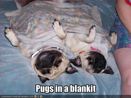 bed blanket nap pug - 1452951808