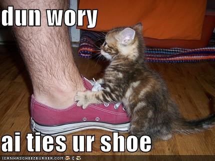 cute,helping,kitten,lolcats,lolkittehs,shoe,shoelace