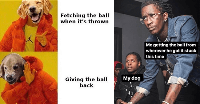 """20 dog memes 