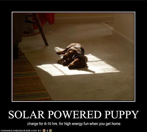 dachshund nap - 1454774016