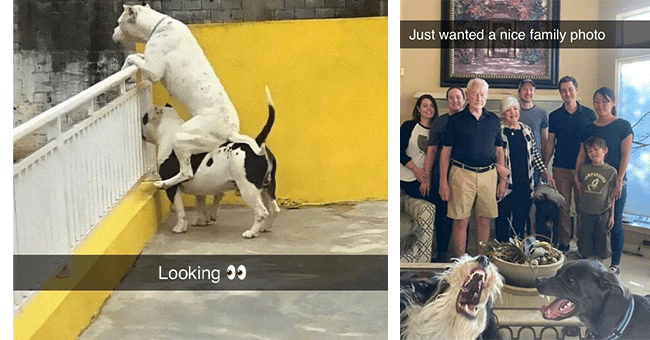 16 dog snapchats | thumbnail left dog sitting on back of another dog looking over fence, thumbnail right family portrait and two dogs making silly faces