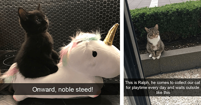 36 cat snaps | thumbnail left cat riding stuffed pony, thumbnail left cat named ralph waiting outside for playmate
