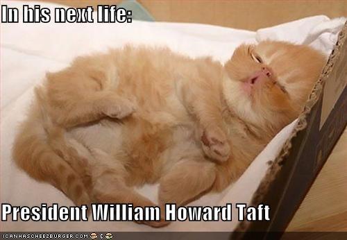 cute kitten look a like president - 1455785216