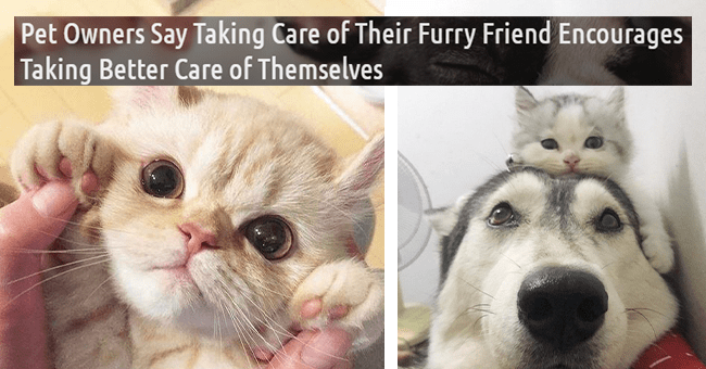 26 images of cute pets | thumbnail left kitten with paws up, thumbnail right small kitten sitting on top of big dog's head