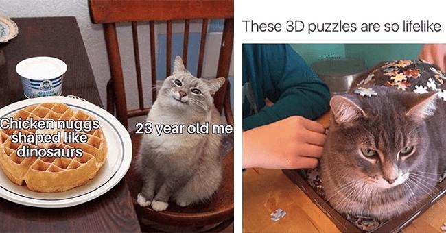 40 cat memes | thumbnail left cat sitting next to waffle meme, thumbnail right cat in 3D puzzle meme