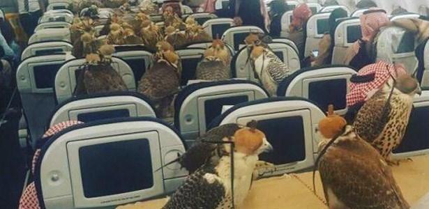 birds,planes