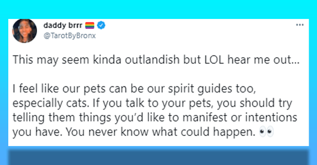 14 animal tweets | thumbnail tweet animal spirit guides on blue background