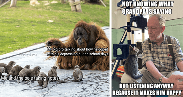 collection of wholesome animal memes | thumbnail includes two memes including an orangutan explaining something to a bunch of otters 'Primate - My big bro talking about how he coped with his depression during school days. t/sipthestreets Me and the bois taking notes.' and a cat sitting on a granddad 'Watch - NOT KNOWING WHAT GRANDPAIS SAYING BUT LISTENING ANYWAY BECAUSE IT MAKES HIM HAPPY'