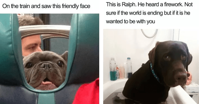 25 wholesome dog memes | thumbnail left dog face in between seats meme, thumbnail right dog in bath meme scared of thunder