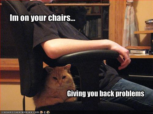 annoying chair ginger - 1457723136