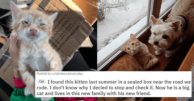 14 before and after pet images | thumbnail left distressed unhealthy kitten, thumbnail right same kitten healthy and happy with dog and text