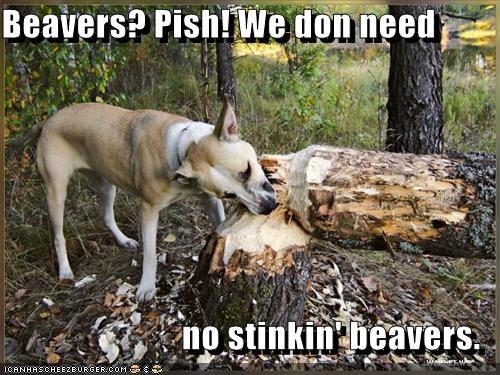 beavers lumberjack tree whatbreed - 1457899264