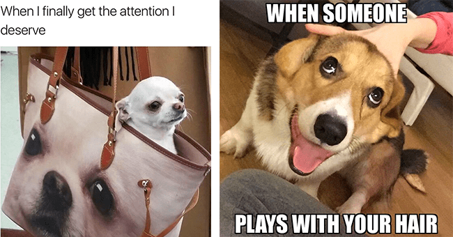 """18 dog memes   thumbnail left chihuahua sitting in purse with dog's face on it meme, thumbnail right dog meme """"when someone plays with your hair"""""""