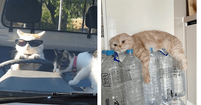 18 silly cat images | thumbnail left cat with sunglasses driving, thumbnail right cat sprawled out on bottles of water