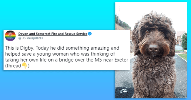 twitter thread 12 tweets/images therapy dog saving woman | thumbnail text of primary tweet (of thread) and picture of digby the dog, fluffy dog