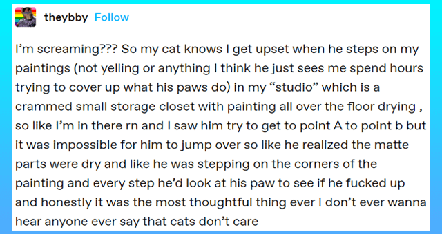 """tumblr posts of small things cats do that show they care about their humans 