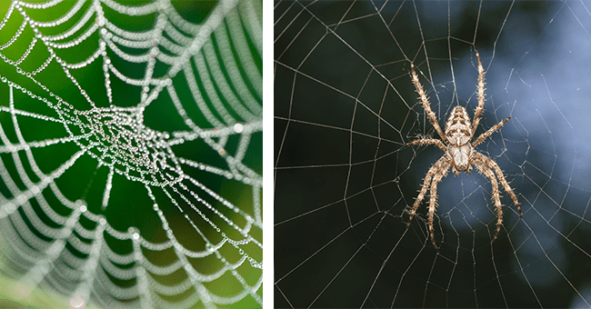 12 images of spiders and spider webs scientific and informative | thumbnail left spider web with dew, thumbnail right spider in spider web