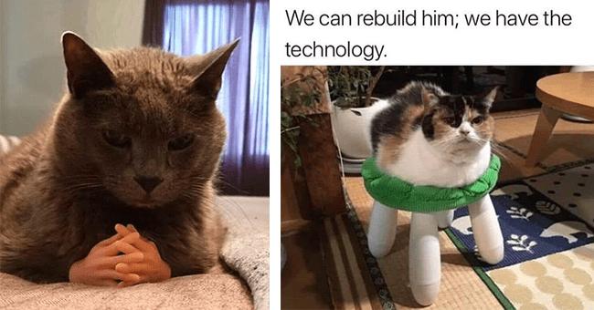 "24 cat memes | thumbnail left cat meme with small plastic hands, thumbnail right cat meme ""we can rebuild him, we have the technology"""