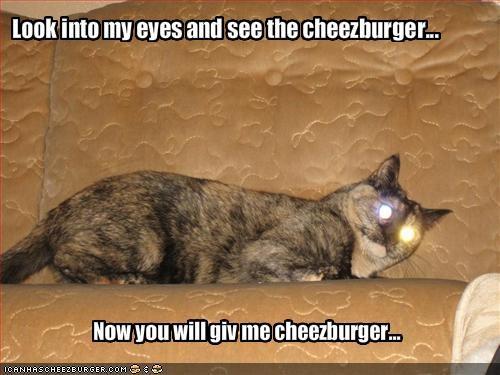 Cheezburger Image 1460061440