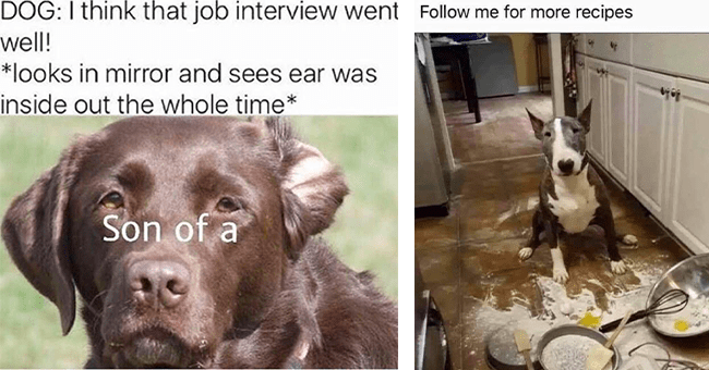 18 dog memes | thumbnail left dog meme with ear inside out, thumbnail right dog attempting to cook meme