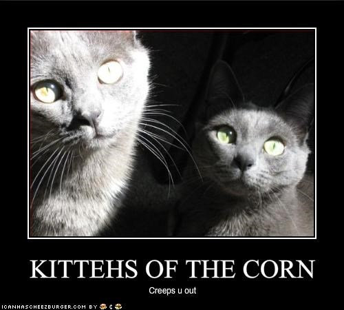 KITTEHS OF THE CORN