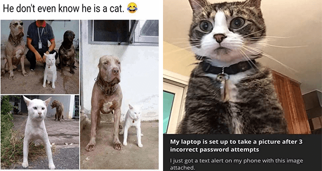 Caturday cat memes   thumbnail includes two memes including a cat behaving like a dog 'Dog - He don't even know he is a cat.' and a picture of a cat 'Cat - My laptop is set up to take a picture after 3 incorrect password attempts I just got a text alert on my phone with this image attached.'
