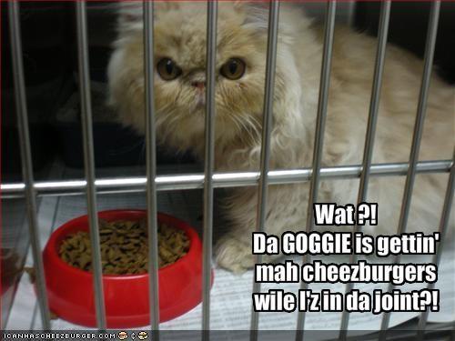 Cheezburger Image 1461353216
